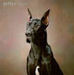 The Beautiful Great Dane - great-danes icon