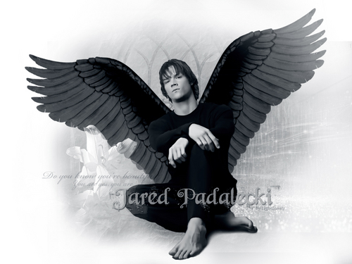 Angel Jared