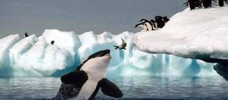 Help! I'm a 企鹅 falling!