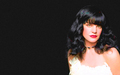 Pauley Perrette Arty (WSWP) - pauley-perrette wallpaper