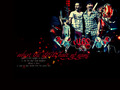 The edge and muse - muse wallpaper