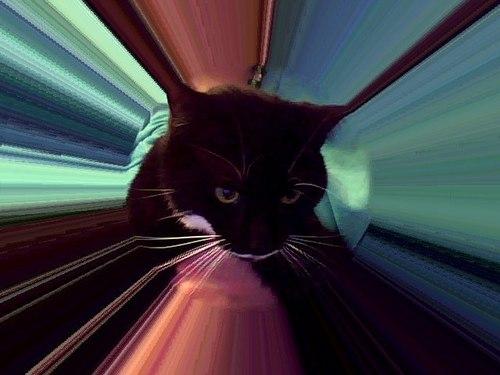Beauty- My kitty