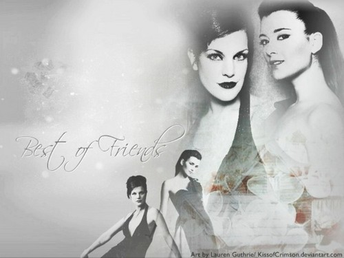 NCIS wallpaper titled Cote & Pauley