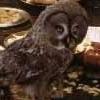 Harry Potter photo entitled Errol