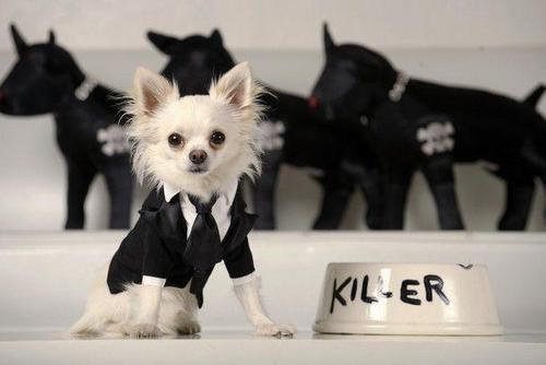 Killer ...lol !!