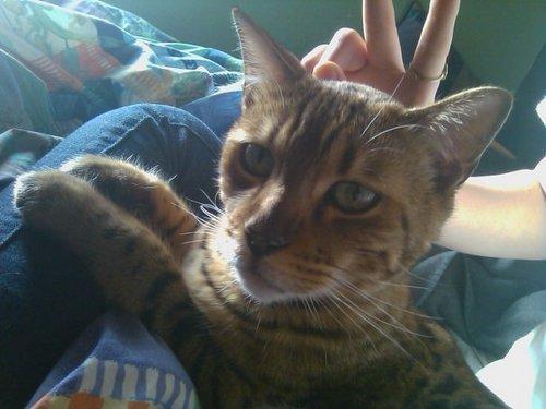 her cat!^.^