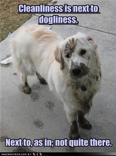 Lol dogs dogs photo 14306449 fanpop