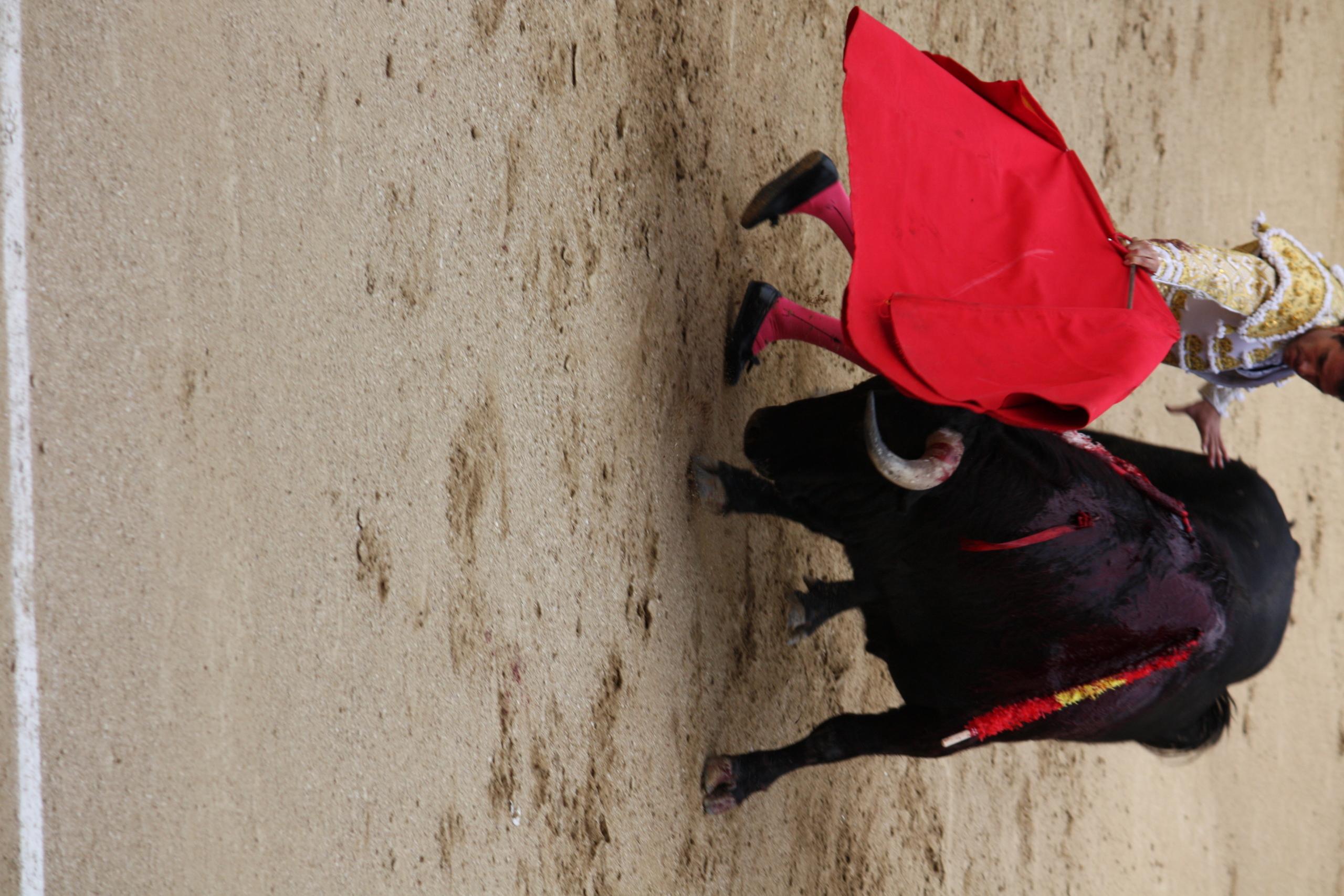 Fall of the matador European