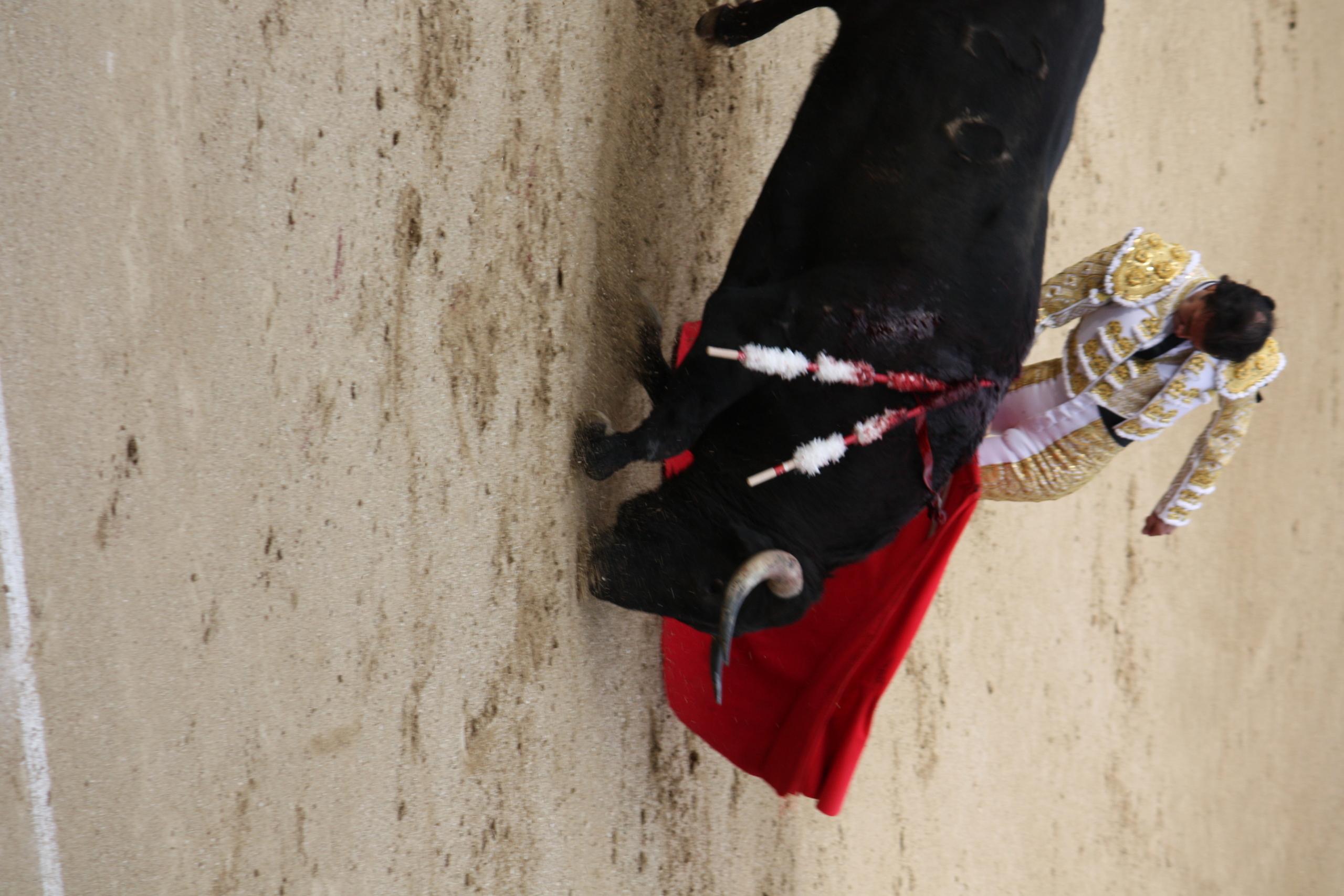 bull fighting 1920x1080 hd - photo #31