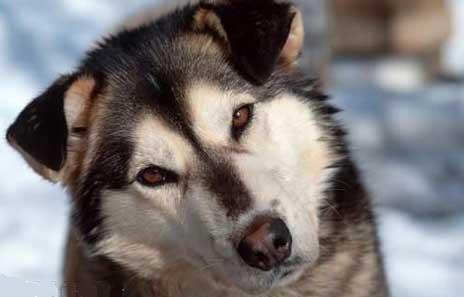 Anjing x