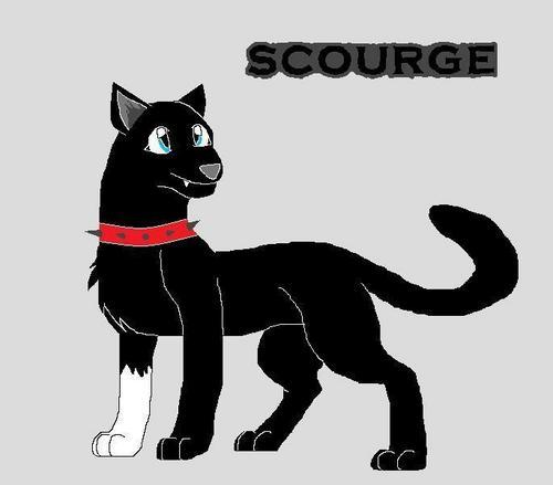 Warrior mèo scourge