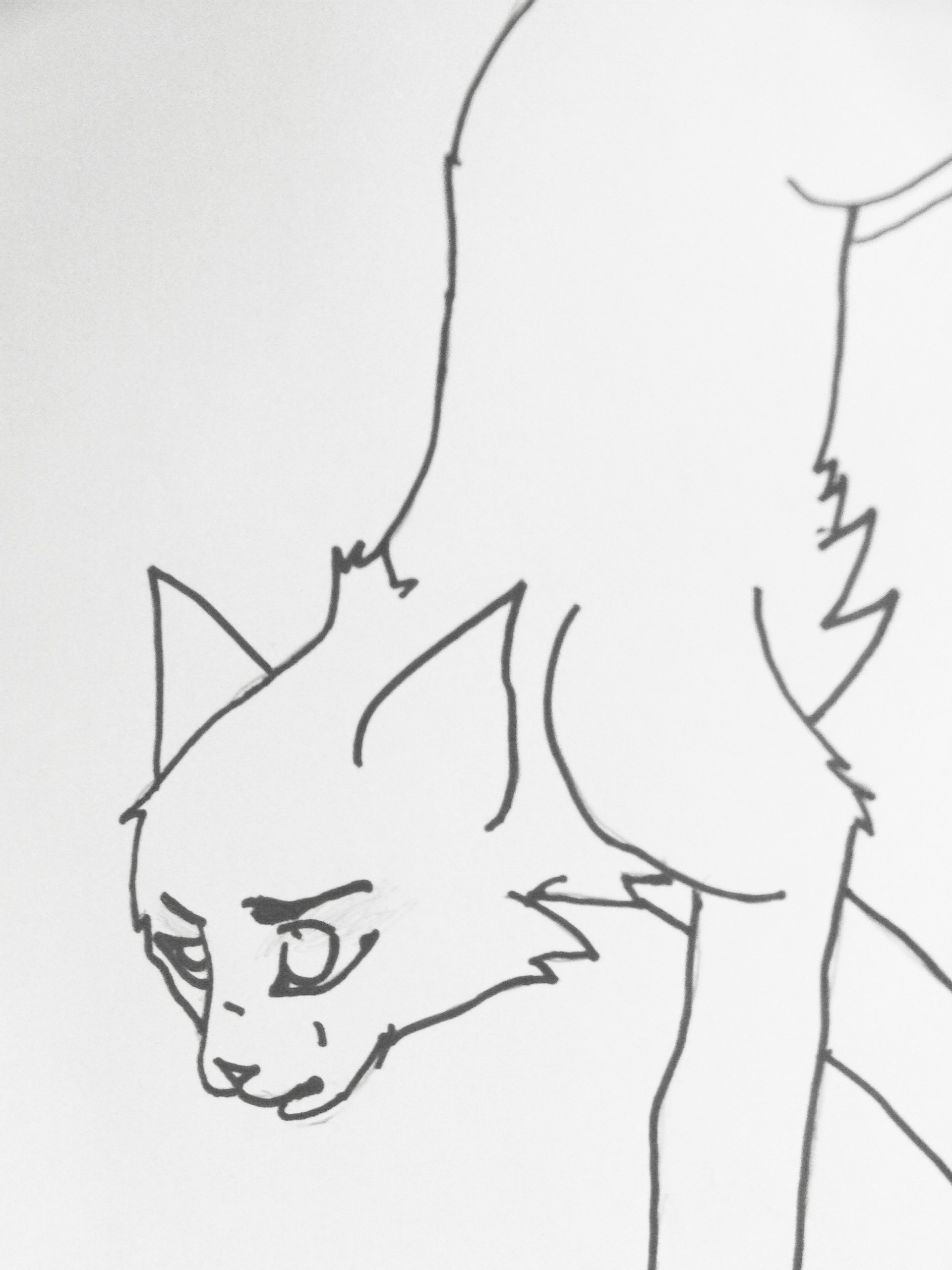 warrior cats coloring pages bluestar energy | Warrior Cats Blue Star Coloring Coloring Pages