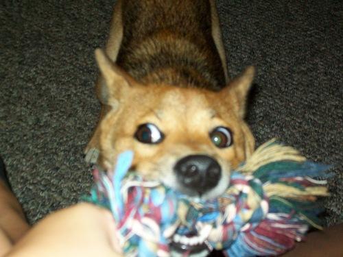 MY DOG LAYA