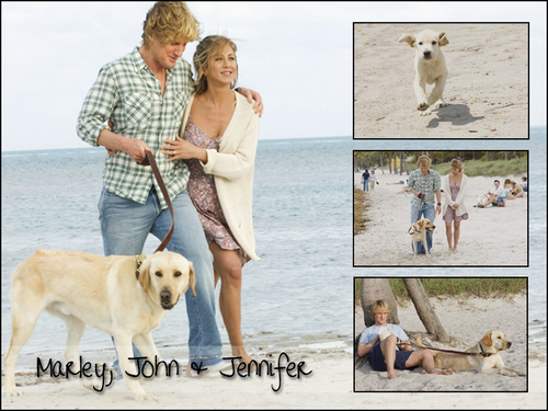 Marley and Me - marley-and-me Fan Art