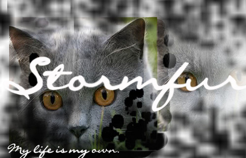 Siggie - warrior-cats-of-the-clans Photo