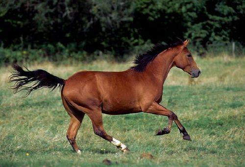 Wild Quarter Horse