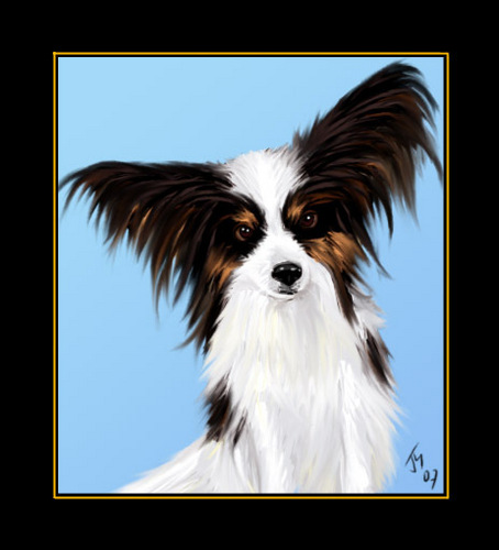 All Small Dogs wallpaper called papillon