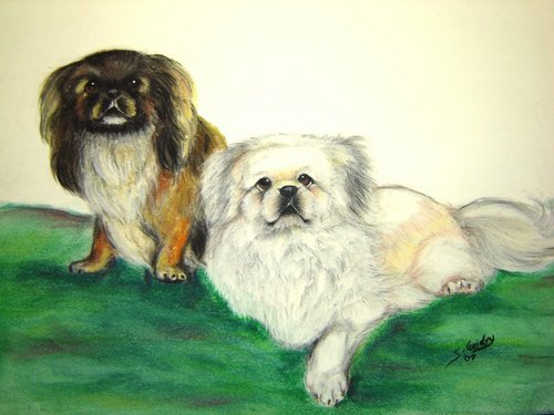 All Small Dogs wallpaper entitled pekingese