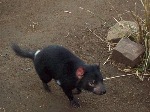 Bonorong Wildlife Park - Tasmania