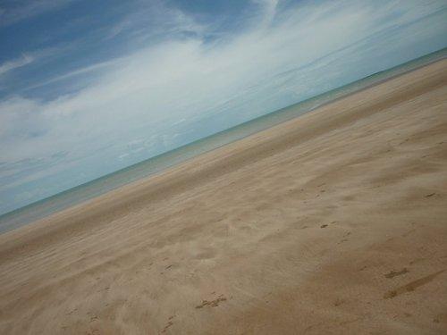 Darwin de praia, praia