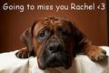 Going to miss आप Rachel <3