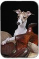 Italian Greyhound  - all-small-dogs photo