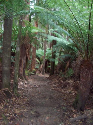 Mount Field - Tasmania