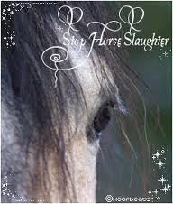 Stop Horse Slaughter Now !