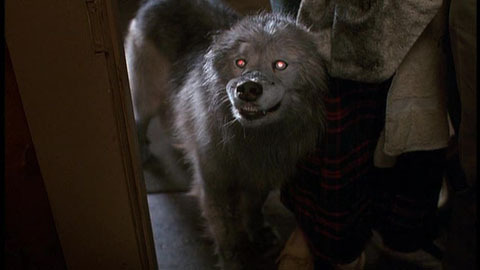 Pet Sematary wallpaper entitled Zowie