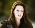 New Moon Companion - the-twilight-saga-new-moon-movie photo