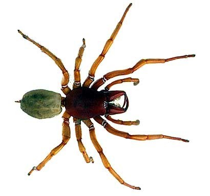 con nhện, nhện