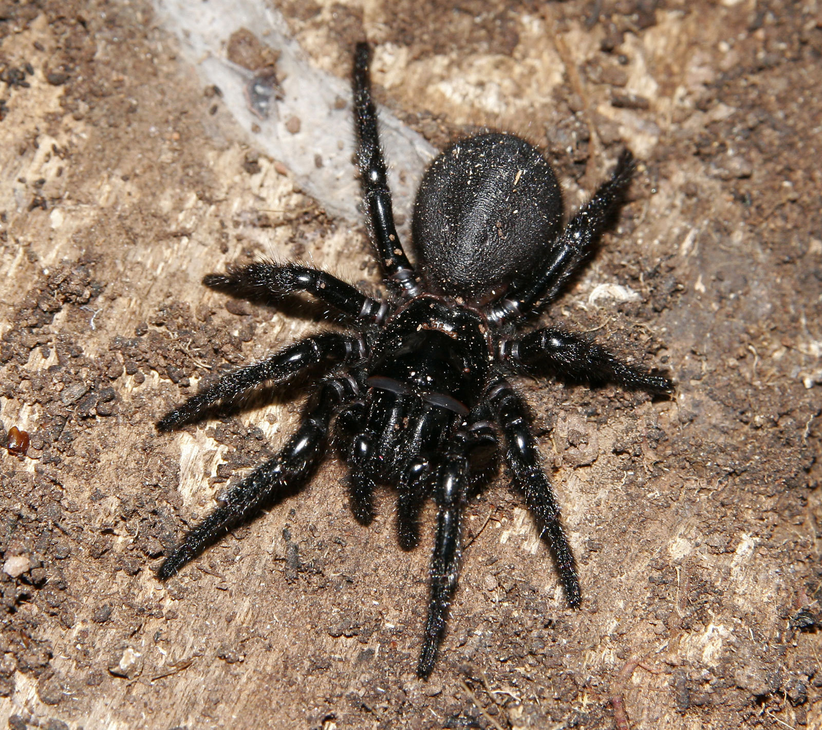 arachnology images spider hd wallpaper and background photos (8572679)