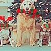 http://images2.fanpop.com/image/photos/8600000/Christmas-3-christmas-8628789-100-100.jpg