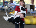 Ginsey St.Croix and Star - dog-agility photo