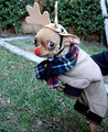 Rudolf the red-nosed chihuahua! - funny-chihuahuas photo