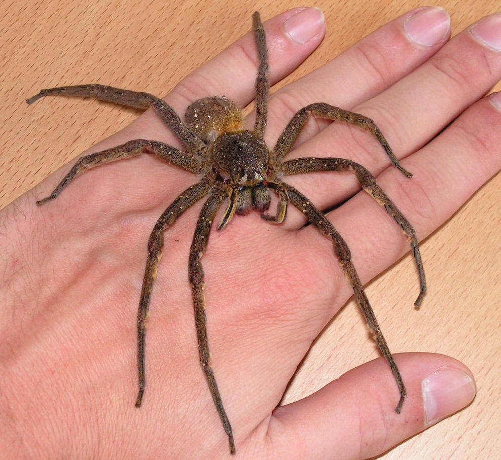arachnology images spiders hd wallpaper and background photos (8620956)