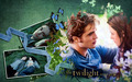 robert-pattinson - meadow wallpaper wallpaper