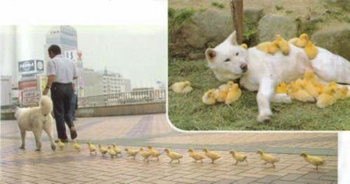 random animals