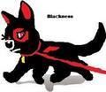 Blackness (Sky's dog)