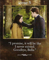 New Board cards - twilight-series photo