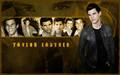 Taylor L. - taylor-jacob-fan-girls wallpaper