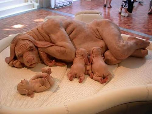 dog-human-hybrid: is it real?