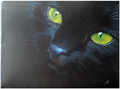 jadeclaw i made this cat on a website - world-of-warriors photo