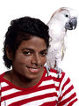 Michael and Moluccan Cockatoo - michael-jackson photo