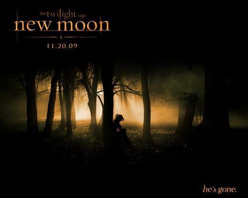 Twilight Series پیپر وال with a beech, a live oak, and a سٹریٹ, گلی entitled new-moon