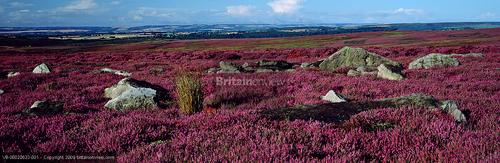 British Countryside