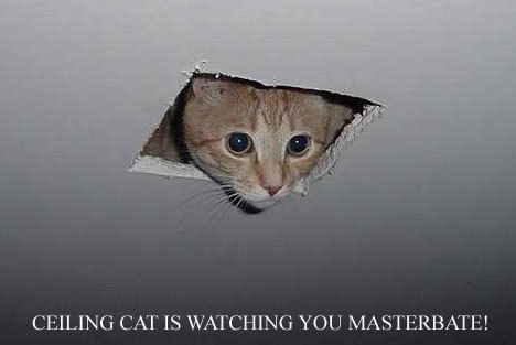 Lol catz wallpaper containing a tom, a kitten, and a cat called Ceiling cat is watching over you masterbrate
