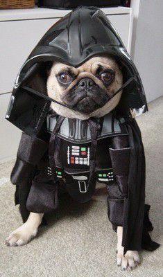 Dark Vadog !