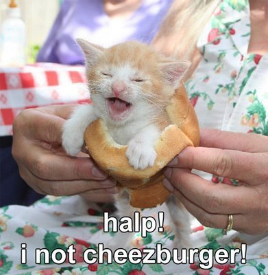 Halp! I not cheezburger