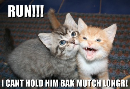 Animal Humor wallpaper containing a kitten titled Lol catz